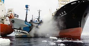 Sea Shepherd's vessel Steve Irwin clashing with Japanese whaler Nisshin Maru