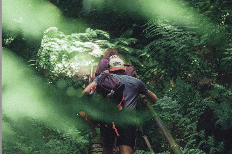 Hikers climb steps in pristine forest