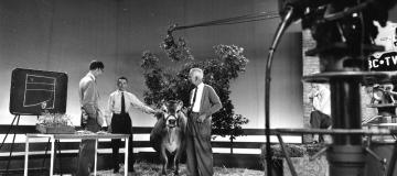 Early days of TV, black and white pic, cow and three men in ABC studio